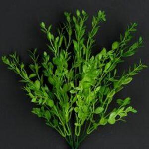 Buxus mini verde crud basic
