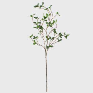 Crenguta Pittosporum verde