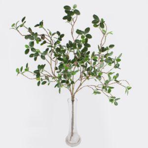 Crenguta Pittosporum verde pic