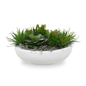 Dracaena mini context b