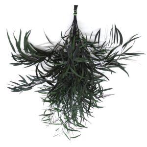 Eucalipt Nicoly Artflora verde inchis
