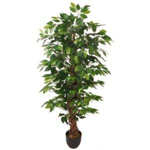 Ficus Liana drept original