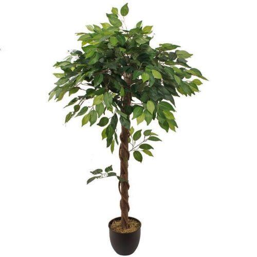 Ficus globular 120 original