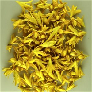 Fructe deco lily galben