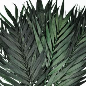 Frunze Palmier pitic