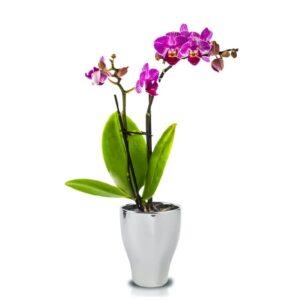 Ghiveci Orchideea rotund glossy 3