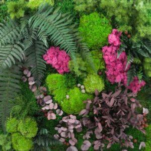Gradin verticala muschi licheni plante conservate 002