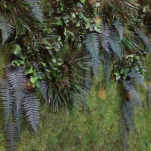 Gradin verticala muschi licheni plante conservate 003