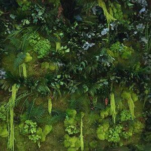 Gradin verticala muschi licheni plante conservate