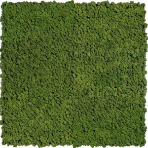 Gradina verticala licheni stabilizati ARTFLORA GreenForest
