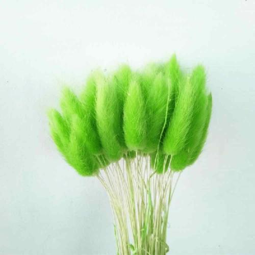 Lagurus Verde deschis