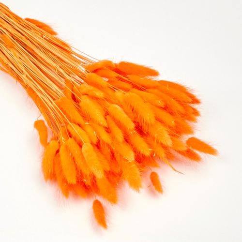 Lagurus portocaliu