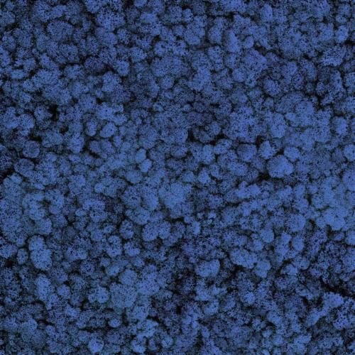 Licheni conservati Blue Intense 1