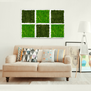 Living tablouri vegetale licheni conservati