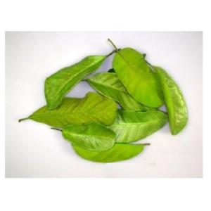 PU Frunze mandioca Verde lamaie set