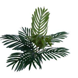 Palmier tufa H50 2