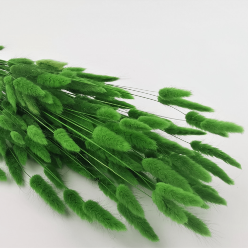 Phalaris verde iarba