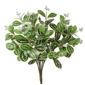 Philodendron tufa bicolor