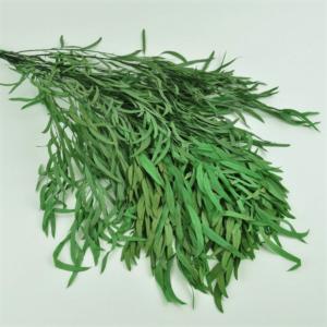 Planta conservata Eucalipt Nicoly Green
