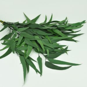 Planta conservata Eucalipt Salcie Green