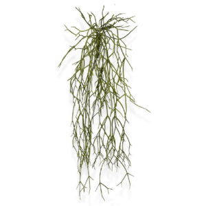 Rhipsalis 55cm Artflora