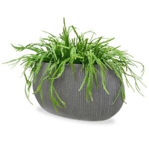 Rhipsalis curgatoare 300cm artificial Artflora in ghiveci
