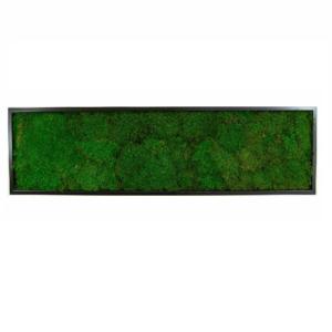 Tablou Muschi conservat plat 30x100 1