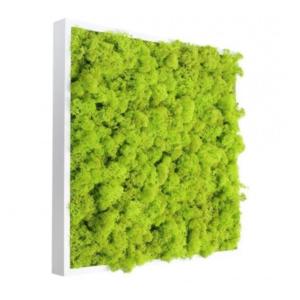Tablou licheni stabilizati 25x25cm rama alba