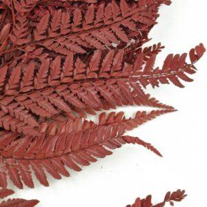 feriga conservata rumo red zoom