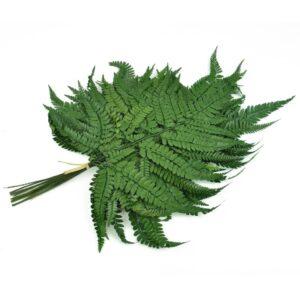 feriga conservata wild verde