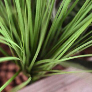 iarba artificiala verde h60 1