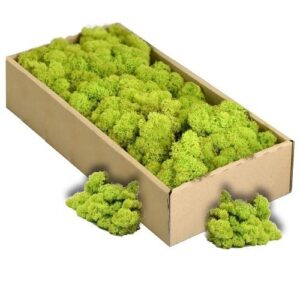 licheni decorativi green lime artflora 500g