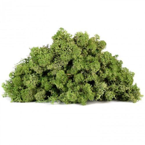licheni vrac artflora green forest