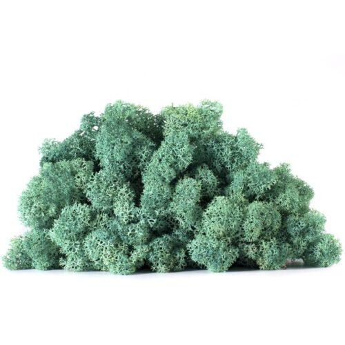 licheni vrac artflora smarald