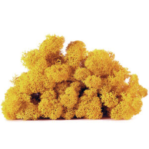 licheni vrac artflora warm yellow