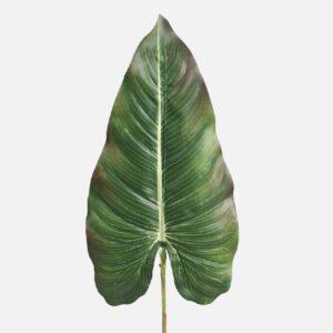 Frunza Anthurium verde inchis h67cm