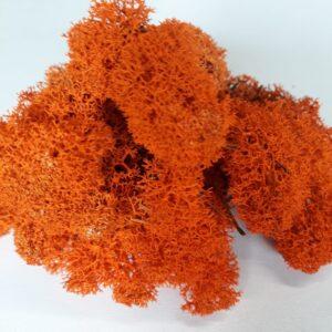 Licheni premium Orange