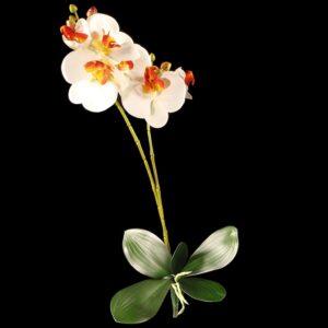 Orhidee crem