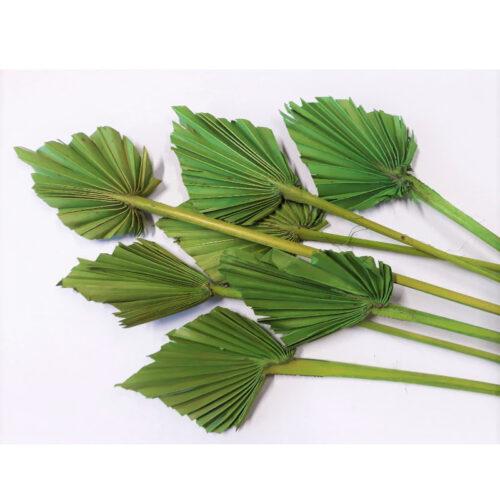 PU Frunza palmier mini Verde iarba set