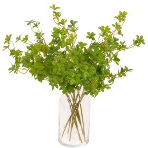Pittosporum verde
