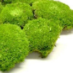 artflora ball moss green apple