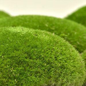 artflora ball moss green apple 1