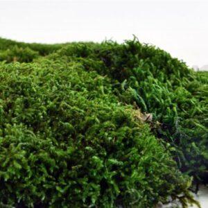 artflora long moss 0