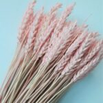 grau uscat roz pal
