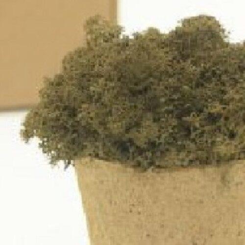 licheni premium brown 1