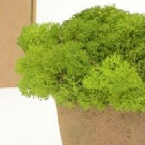 licheni premium green apple 1