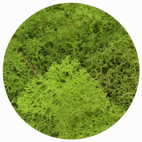 licheni premium green apple 2