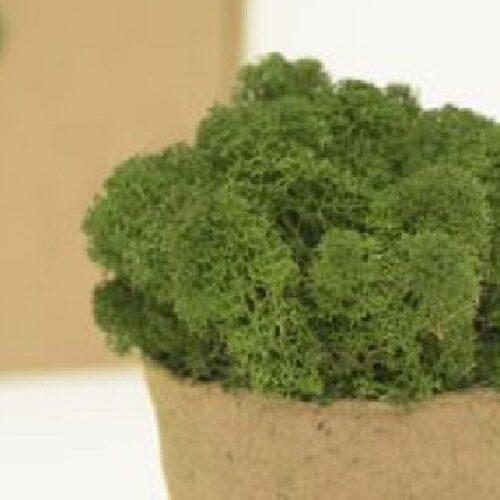 licheni premium green broccoli 1