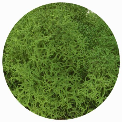 licheni premium green grass 2
