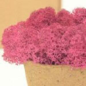 licheni premium pink 1